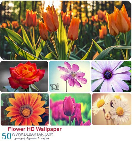 دانلود رایگان عکس گلهای قشنگ با کیفیت HD - سایت دانلود برتر